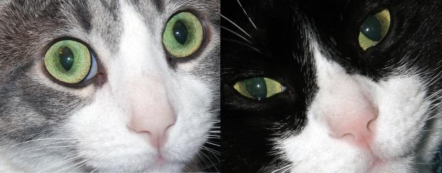 catseyes